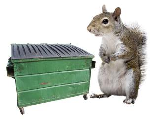 dumpster-squirrel2